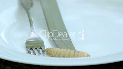 Dish of beetle larvae.larvae beetle on a plate.