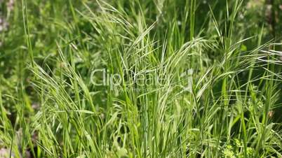 fresh grass - natural background