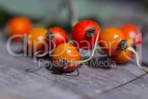 Rosehip on rustig wodden Background