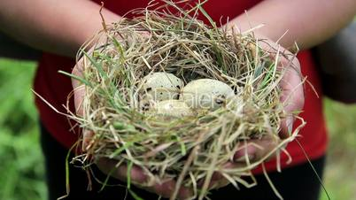 Nest with eggs in the hands of,nest with eggs on the palms