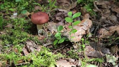 Mushrooms in the wood.