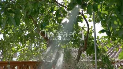 Shower in Garden under Shade Trees, closeup