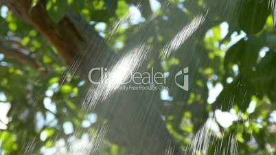 Jet of Water from a Garden Shower, closeup