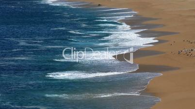 Flock of Seagulls Sitting on the Beach Ocean with Waves, Atlantic ocean