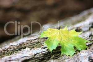 Buntes Blatt auf einem Baumstamm