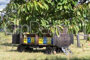 Alter Bienenwagen auf einer Obstplantage