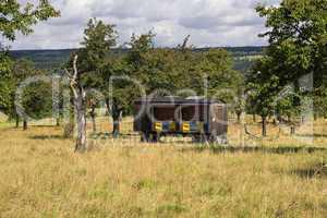 Landschaft mit alten Obstbäumen und Bienenwagen