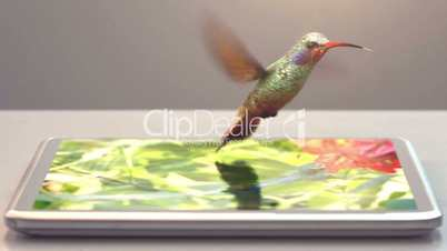 tablet pc and humming-bird