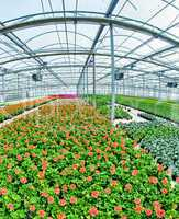 Young plants growing in a very large plant nursery. Greenhouse e