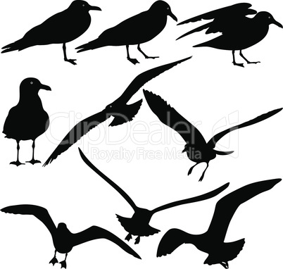 Set black silhouettes of seagulls