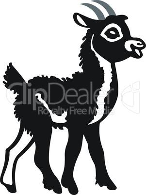 Little black goat