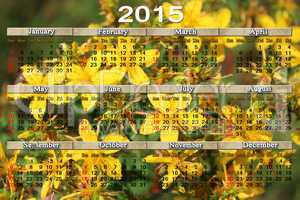 calendar for 2015 year with flowers of St.-John's wort
