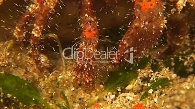 Hermit Crab Macro Shot