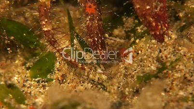 Eating Hermit Crab Macro Shot