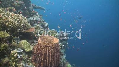 Edge of a colorful coral reef