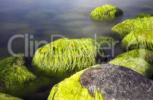Seaside stones and moss