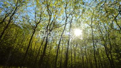 rays of the sun through the trees