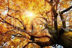 Prächtige Herbstszene