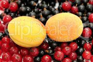 currant and apricot
