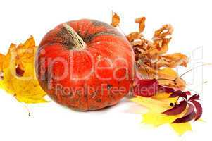 Ripe pumpkin and autumn leaves