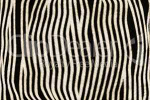 Fur Animal Textures, Zebra