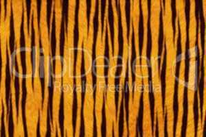 Fur Animal Textures, Tiger