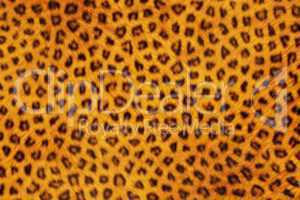 Fur Animal Textures, Leopard