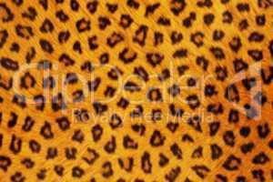 Fur Animal Textures, Leopard