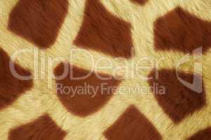 Fur Animal Textures, Girafe
