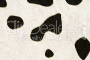 Fur Animal Textures, Cow