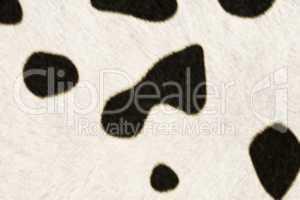 Fur Animal Textures, Cow