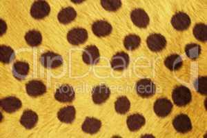 Fur Animal Textures, Cheetah