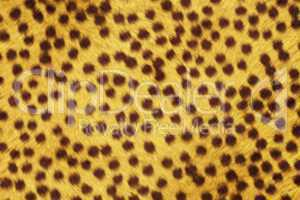 Fur Animal Textures, Cheetah