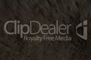 Fur Animal Textures, Black Bear
