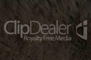Fur Animal Textures, Black Bear