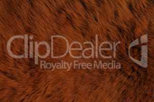 Fur Animal Textures, Brown Bear
