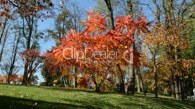 The trees in autumn colors in Mezhigirya on October 14, 2014 in Novi Petrivtsi, Ukraine. It is former residence of ex-president Yanukovich, now open to the public