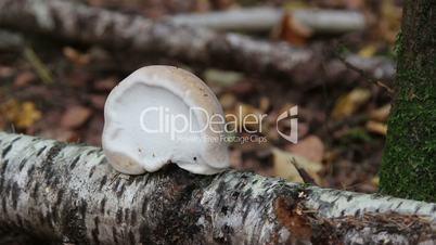 Mushrooms in the wood