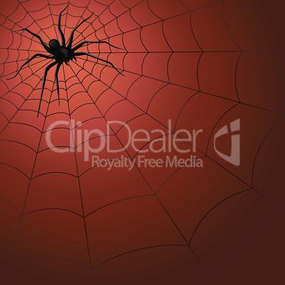Big dark spider on the web