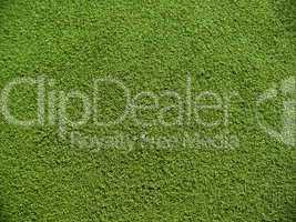 Soccer field grass on the green