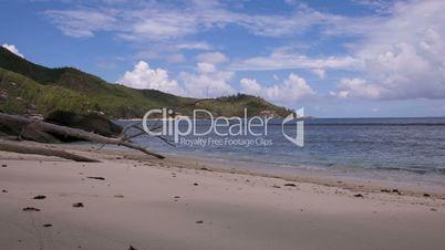 Dead Tree at sandy Beach // Seychelles HD
