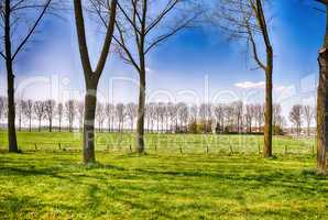 Beautiful Netherlands Countryside in Spring Season