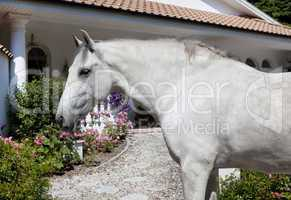 Andalusia Horse in the garden