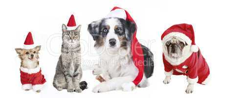 Dogs and Cat Christmas