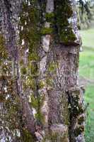 Parasite tree removed