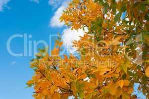 autumn leaves against a cloudy sky