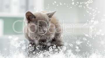 Composite image of kitten in veterinary office