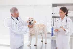 Veterinarian coworker examining a dog