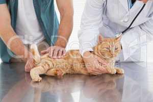 Vet examining an orange cat
