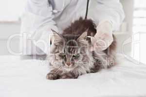 Vet examining a cute grey cat